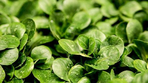 Nährwerttabelle - Sekundäre Pflanzenstoffe - Grünes Blattgemüse - fair4world