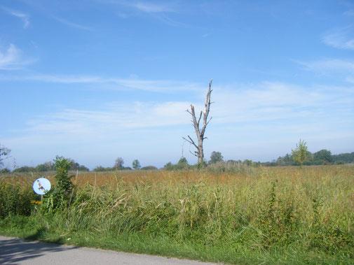 Die Riedwiesen sind das Revier des scheuen und seltenen Schwarzmilans