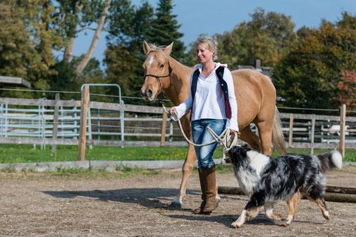 Horsemanship Kurs mit eigenem Pferd auf dem Reiterhof Rehedyk mit Tanja Rühter-Böttger