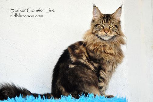 Stalker Gonsior Line