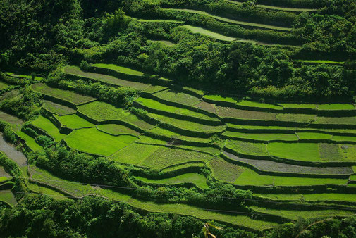 Auf dem Weg zurück kamen wir immer wieder an wunderschönen Reisterassen vorbei .