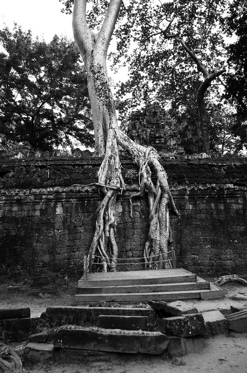 Ta Prohm Tempel