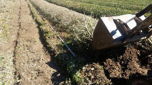 静岡県川根の有機栽培茶 樽脇園 無農薬 無化学肥料 オーガニック 改植