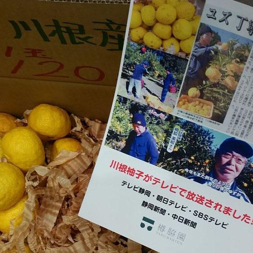 川根(静岡県)の有機栽培茶 樽脇園 無農薬 無化学肥料 オーガニック