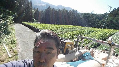 川根の有機栽培茶 樽脇園 無農薬 無化学肥料 オーガニック 樽脇園10月15日茶園