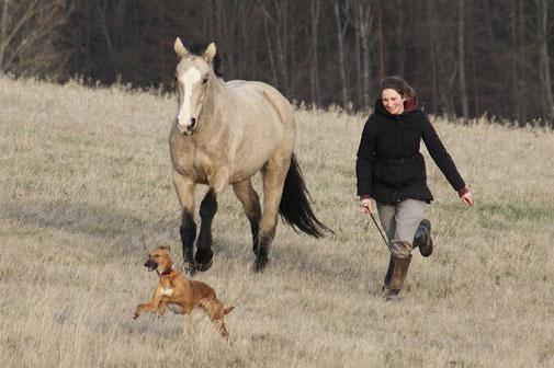 Freiarbeit, Liberty, Horsemanship, Natural Horsemanship, Reiten