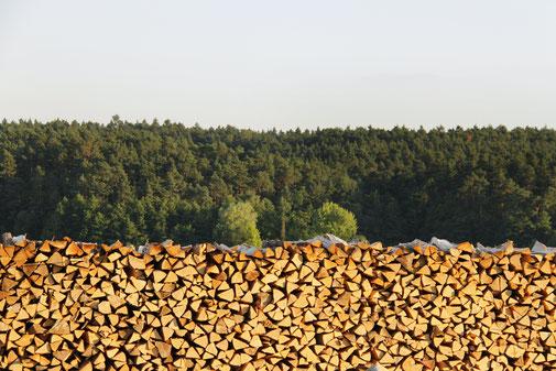 Trockenes Brennholz Buche zu verkaufen