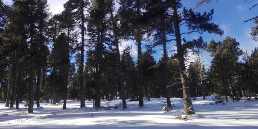 Camí TC178 Raquetes de neu