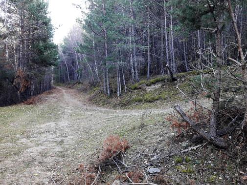 Bicicleta ruta circular tc213 - Boscos Pla de les Forques