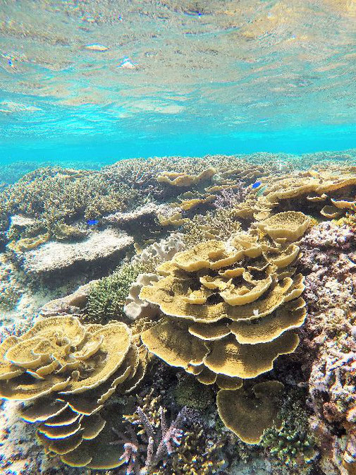 透明度の高い珊瑚礁