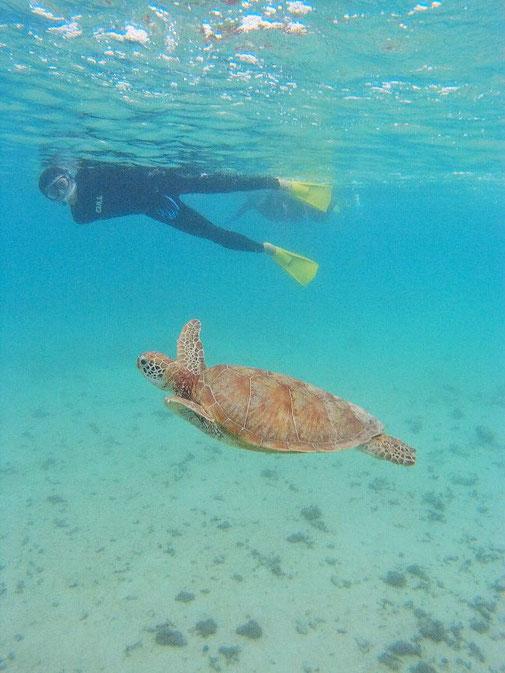 宮古島の海でウミガメとシュノーケル