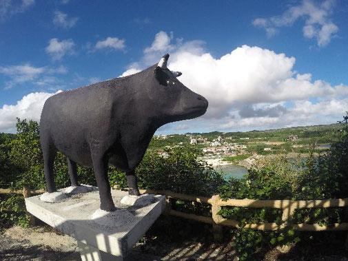 宮古島インギャーマリンガーデンインギャーの牛