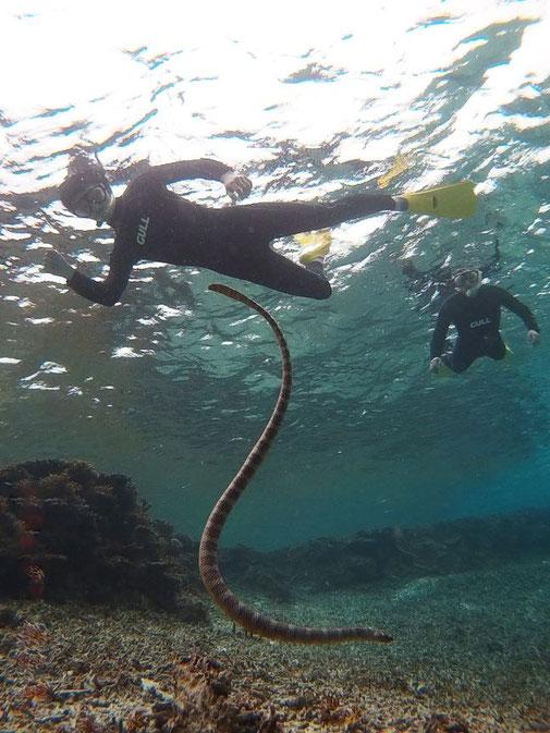 ウミヘビとシュノーケル