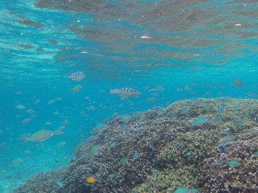 沢山の熱帯魚