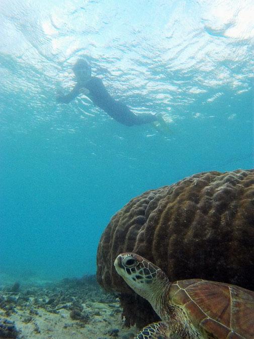 シュノーケリングでウミガメ観察