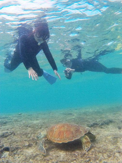 宮古島でウミガメとシュノーケル