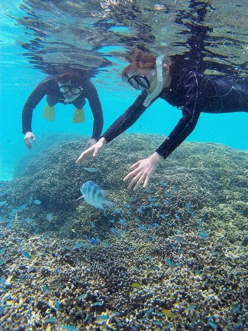 宮古島の手の届きそうな熱帯魚