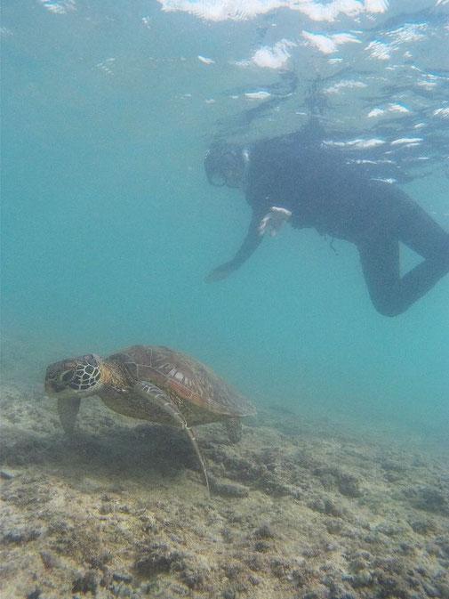 宮古島でのんびりウミガメとシュノーケル