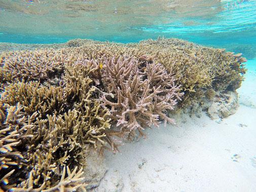 綺麗な珊瑚礁