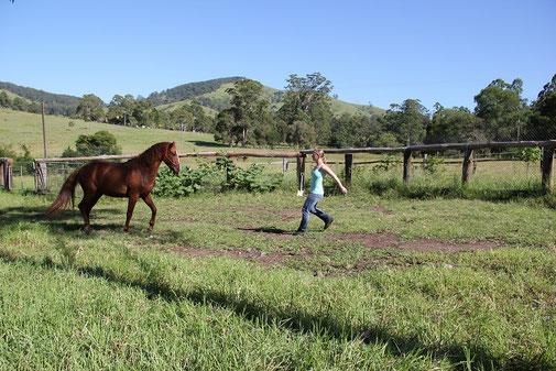 Macht unbewusster Bilder und Gedanken im Umgang mit Pferden
