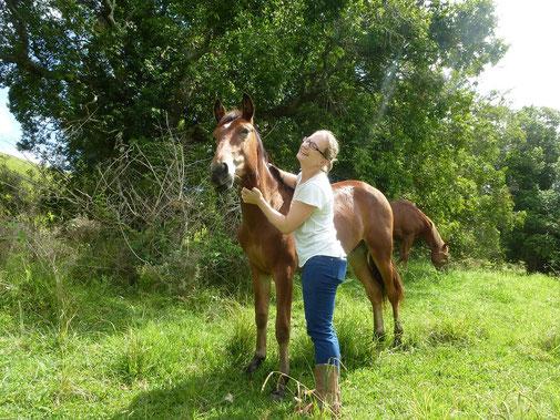 Vermenschlichung beim Pferd - bewusster Umgang mit Pferden