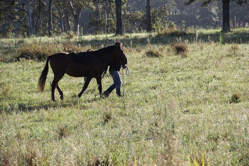 Spazieren mit Pferd, mein Pferd reißt sich los, Pferdetraining