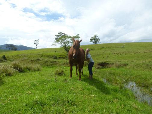 Vom Wildpferd zum Schmusetier - wilde Pferde achtsam zähmen