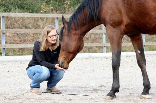 Pferdetraining und Horsemanship mit Heike Gunzenhauser online und im Kreis Göppingen, Geislingen, Heidenheim, Stuttgart