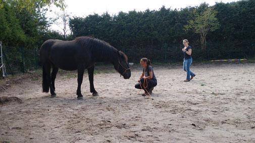 Pferdebotschaften entschlüsseln, Intuition finden, Probleme mit Pferd lösen