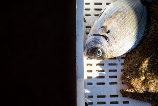 Il mercato del pesce di Selinunte