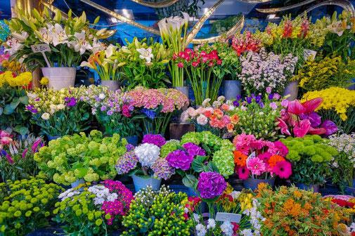 Wien, Vienna, Österreich, Die Traumreiser, Naschmarkt, Blumen
