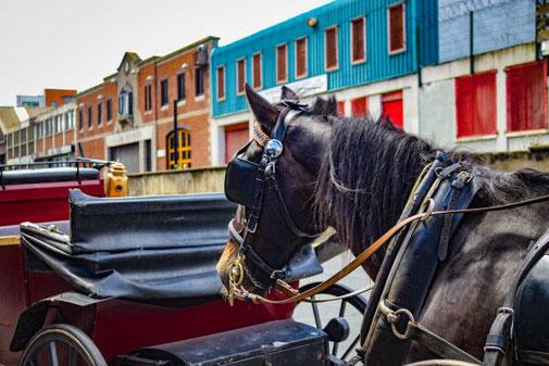 Dublin, Irland, Die Traumreiser, Kutsche, Pferdekutsche