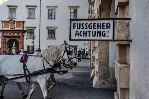 Wien, Vienna, Österreich, Die Traumreiser, Fiaker, Pferdekutsche, Kutsche, Pferde