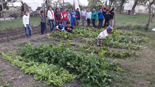 Reiche Ernte im Schulgarten in Las Masitas.