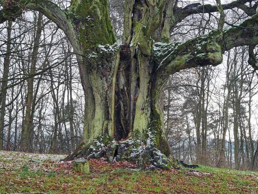 Friedhofslinde bei Thundorf