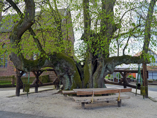 Tanzlinde in Himmelsberg