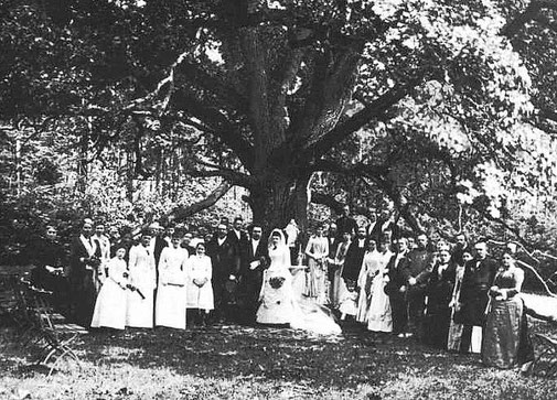 1. Hochzeitsgesellschaft unter der Eiche im Jahr 1892