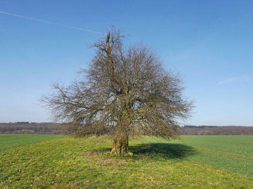 Apfel bei Beberbeck