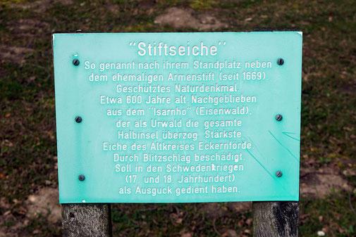 Stiftseiche in Dänisch-Nienhof