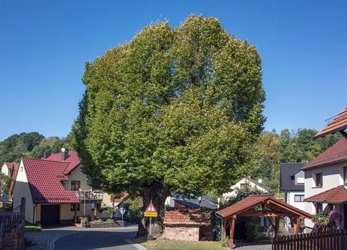 Dorflinde in Habichstahl