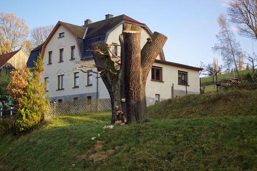 Gerichtseiche in Gelenau