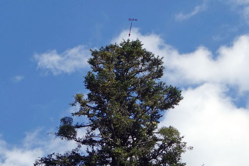 mit 53,8 m höchste gemessene Spitze