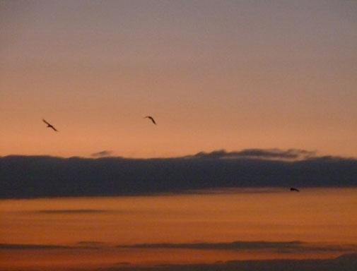 Für die Harmonisierung des Liquorflusses stehen die drei Vögel, welche beim Sonnenuntergang in harmonischer Formation fliegen. Link: Manuelle Therapien mit den anderen Therapieformen.