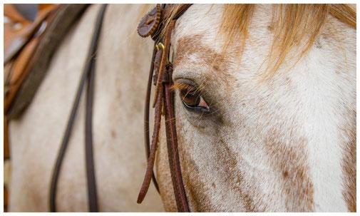 Coaching mit Pferden Berlin Brandenburg, persönliche Weiterentwicklung durch pferdegestütztes Coaching, Schulung nonverbale Kommunikation, Selbstreflexion, eigene Wahrnehmung und Wirkung nach außen