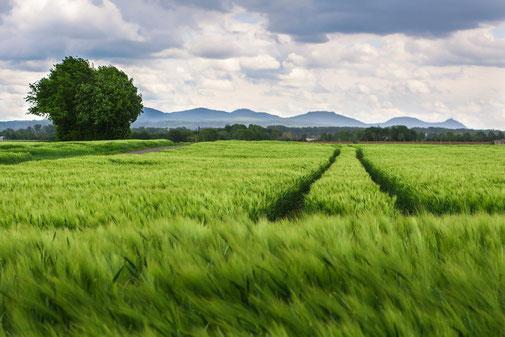 champs maladies végétal céréale exploitation dégénérescence élevage poulet bovin