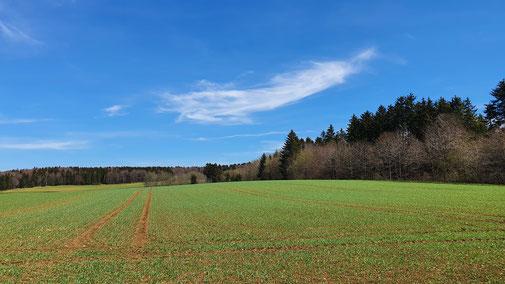 Auf den Feldern wird es langsam grün...