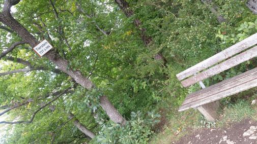 Auf dem Tierstein, oberhalb von Gosbach
