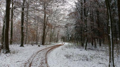 Novemberwald in Nellingen