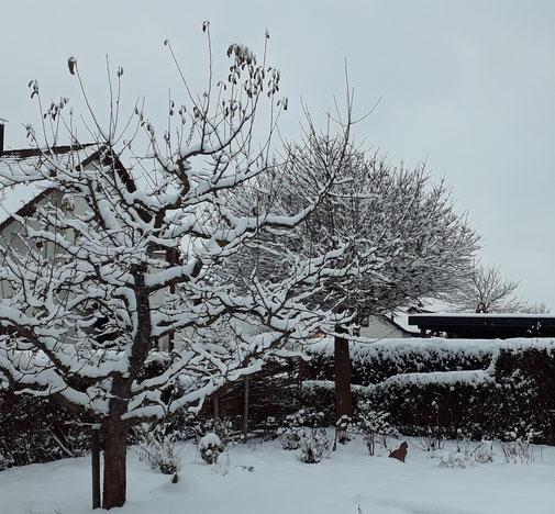 Der Apfelbaum hat noch einige Blätter in das neue Jahr gerettet...