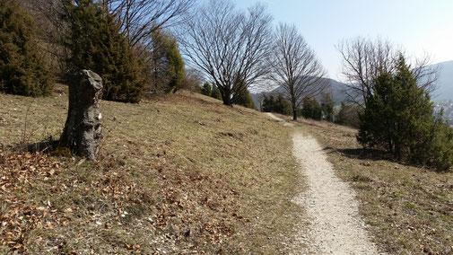 Trail Richtung Reichenbach